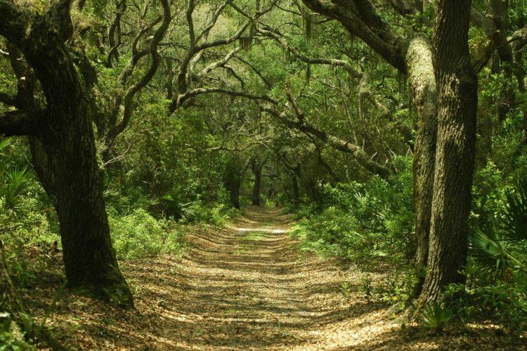 Det Hemmelige Spor i Skoven
